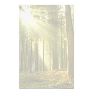 Pine forest with sun shining stationery paper