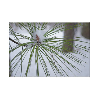Pine in the Snow Gallery Wrap Canvas