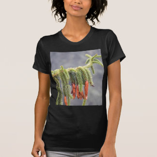 pine leaves under rain T-Shirt