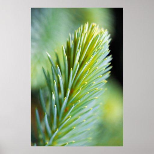 Pine Macro Print