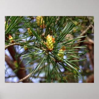 Pine needles close up poster