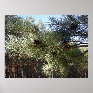 Pine Print