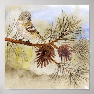 Pine Siskin Canvas Print