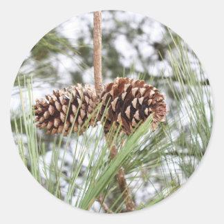 Pine stickers