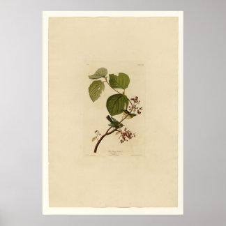 Pine Swamp Warbler Print