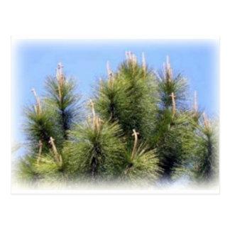 pine tree cross postcard