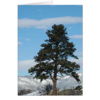 Pine Tree In Steamboat Springs, Colorado Card