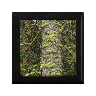 Pine_Tree_Moss Gift Box