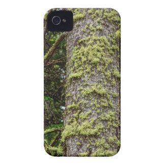 Pine_Tree_Moss iPhone 4 Case
