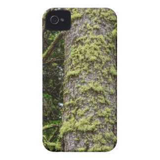 Pine_Tree_Moss iPhone 4 Covers