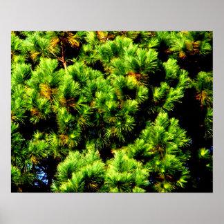 Pine Tree Print