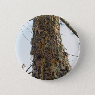 Pine tree resin on the trunk 6 cm round badge