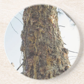 Pine tree resin on the trunk coaster