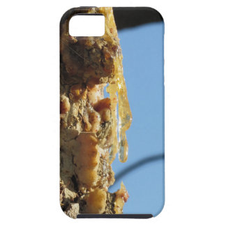 Pine tree resin on the trunk iPhone 5 case