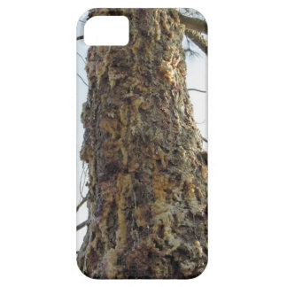 Pine tree resin on the trunk iPhone 5 covers