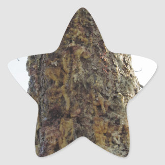 Pine tree resin on the trunk star sticker