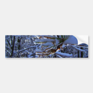 Pine tree with snow and light reflecting on a need bumper sticker