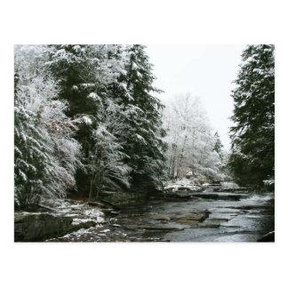 Pine trees Christmas postcard