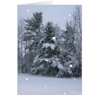 Pine Trees & Falling Snow Note Card