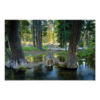 Pine Trees in a Stream Poster