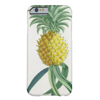 Pineapple engraved by Johann Jakob Haid (1704-67) Barely There iPhone 6 Case