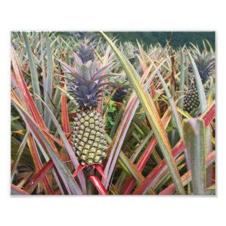 Pineapple Field, Pineapple, Photography Photo Print