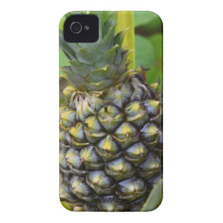 Pineapple iPhone 4 Case