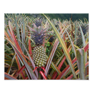 Pineapple, Pineapple Field, Photography Poster