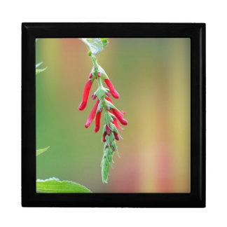 Pineapple Sage Bloom Gift Box