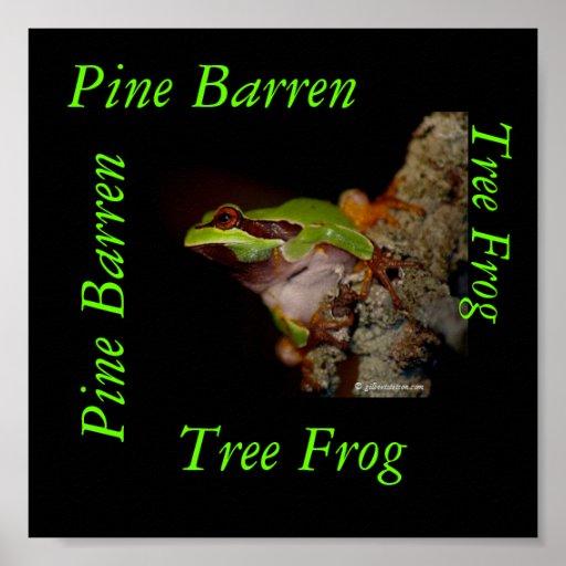 pinebarrentf10, Tree Frog, Pine Barren, Pine Ba... Print