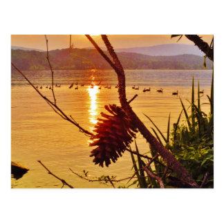 Pinecone Lake sunset Postcard