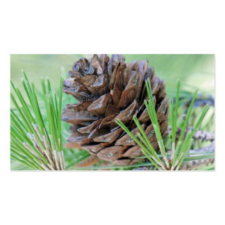 Pinecone Pack Of Standard Business Cards