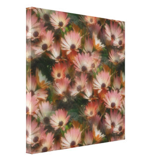 Pink African Daisies Flower Wrapped Canvas Stretched Canvas Prints