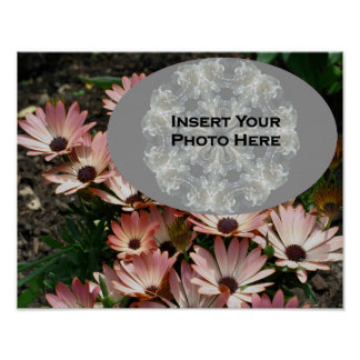 Pink African Daisy Flowers Your Photo Poster