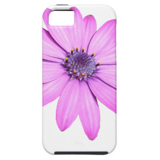 Pink Afrıcan Daisy With Transparent Background iPhone 5 Case