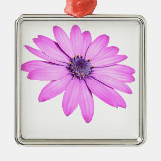 Pink Afrıcan Daisy With Transparent Background Metal Ornament