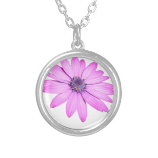 Pink Afrıcan Daisy With Transparent Background Silver Plated Necklace
