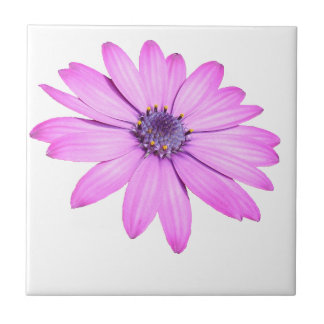 Pink Afrıcan Daisy With Transparent Background Small Square Tile