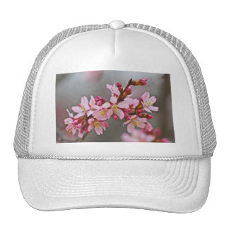 Pink Against A Gray Sky Japanese Cherry Blossoms Cap