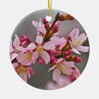 Pink Against A Gray Sky Japanese Cherry Blossoms Ceramic Ornament