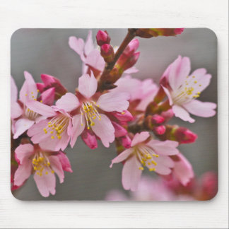 Pink Against A Gray Sky Japanese Cherry Blossoms Mouse Pad
