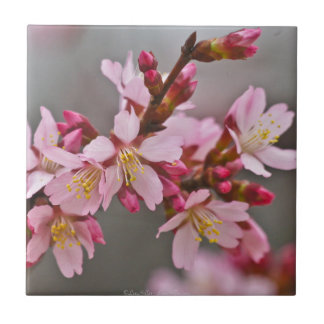Pink Against A Gray Sky Japanese Cherry Blossoms Tile