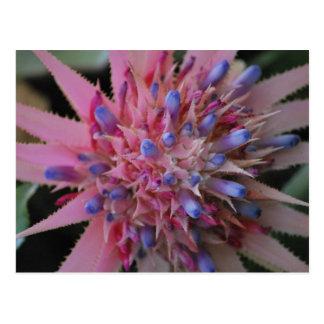 Pink and Blue Aechmea #2 Postcard