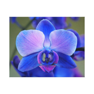 Pink and Blue Orchid Canvas Print
