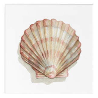Pink and Cream Seashell Acrylic Wall Art