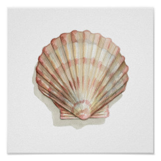 Pink and Cream Seashell Poster