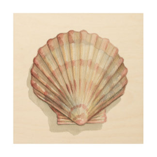Pink and Cream Seashell Wood Canvas