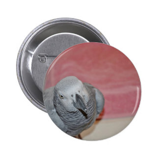 Pink and Gray African Grey Parrot Pinback Button