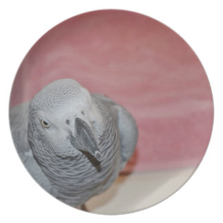 Pink and Gray African Grey Parrot Plate