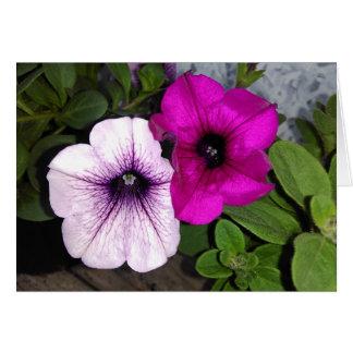 Pink And Purple Petunia Card